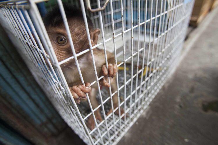 02_alexandra_radu_indonesia_street_show_monkey_topeng_monyet