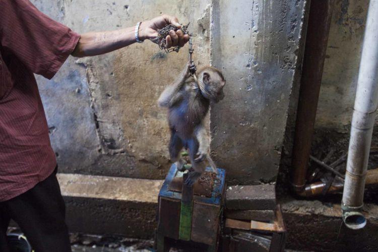 04_alexandra_radu_indonesia_street_show_monkey_topeng_monyet