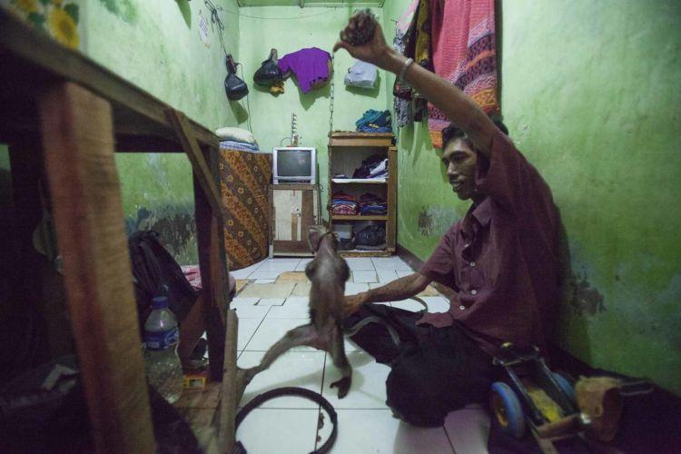 05_alexandra_radu_indonesia_street_show_monkey_topeng_monyet