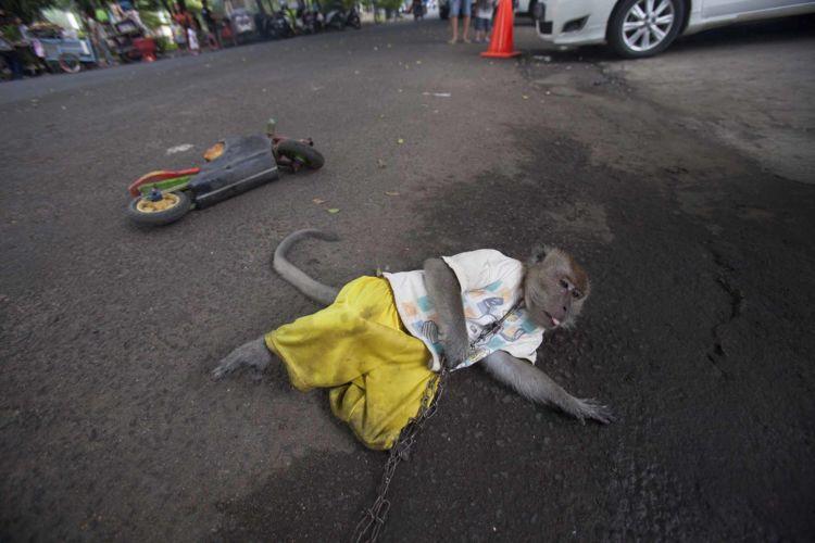 08_alexandra_radu_indonesia_street_show_monkey_topeng_monyet