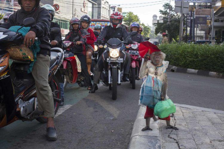 09_alexandra_radu_indonesia_street_show_monkey_topeng_monyet