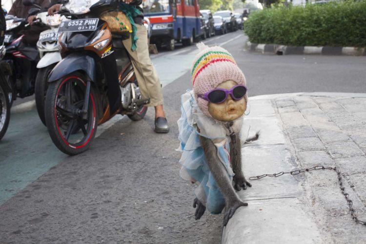 10_alexandra_radu_indonesia_street_show_monkey_topeng_monyet