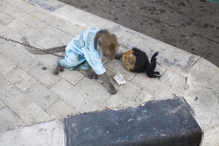 11_alexandra_radu_indonesia_street_show_monkey_topeng_monyet